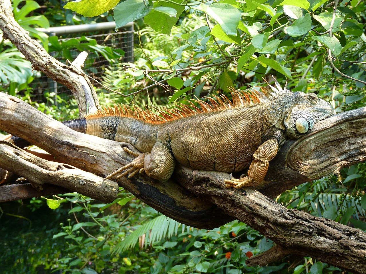 lizard-414725_1280